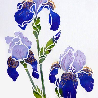 iris2-p15
