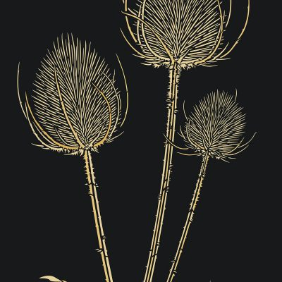 large-teasels-c8