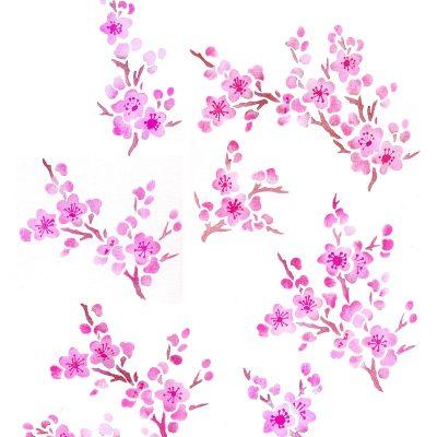 blossom-theme1