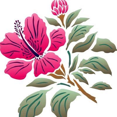 hibiscus2-1
