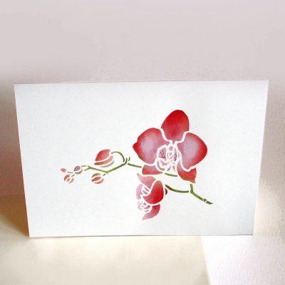 orchid-single-p8