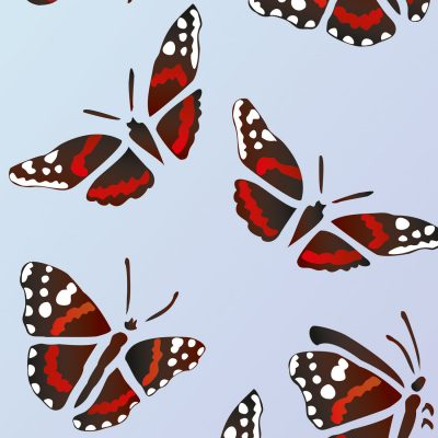 red-admiral-butterfly-2