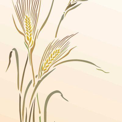 rye-grass-C11