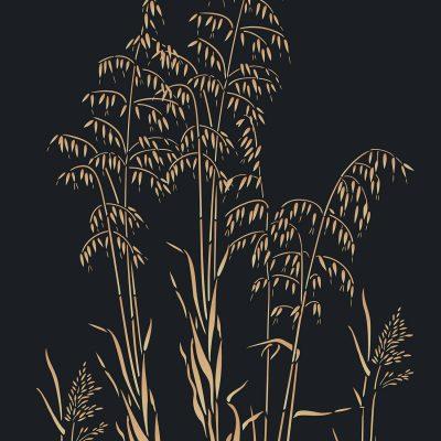 slender-oats-C14