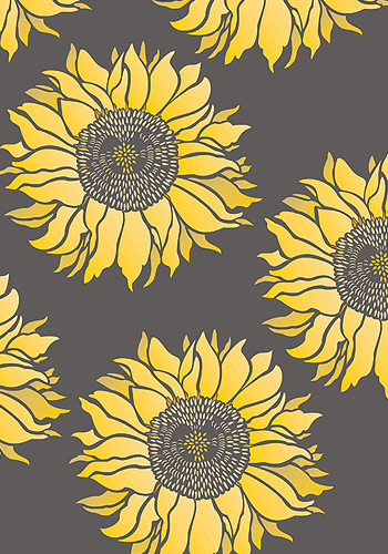 Sunflower Background Pictures