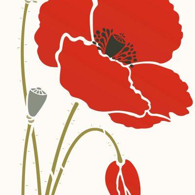 233-giant-poppy1-C10